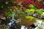 3343662-pond-with-natural-stones-in-japanese-zen-garden
