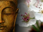 buddha-wallpapers-photos-pictures-zen-flowers