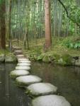 Progettazione-giardini-Zen_m