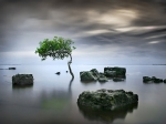 Zen_Tree_Wallpaper__yvt2